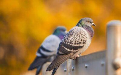 Keep Those Birds off your Custom Deck